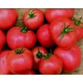 """Tomate """"Berner Rose"""""""