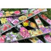 Blumenzollstock