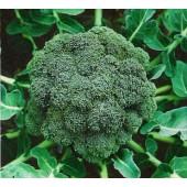 Broccoli Ramoso calabrese