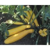 """Zucchini """"Gold Rush"""""""